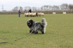 Jari-schapendrijven