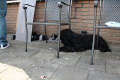 In het zonnetje was het nog best warm dus na alle indrukken lekker in de schaduw in slaap vallen